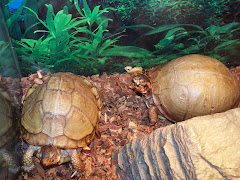 My Turtles -Miss Lucy and Mr. Turtle