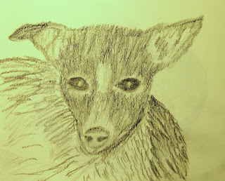 original graphite sketch of pet dog by American artist atul pande