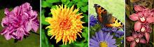imagens de plantas e animais