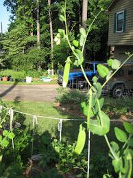 May '09 Front Yard