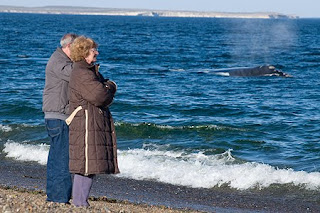 Shore  Whale Watching - El Doradillo, Valdes Peninsula , the best place on earth