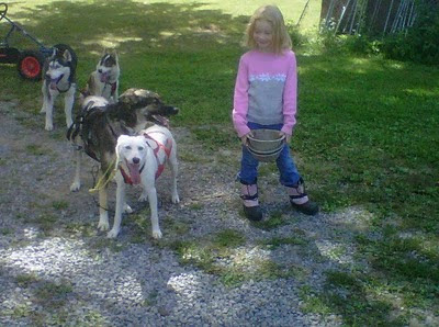 Image Result For Dog Kennel
