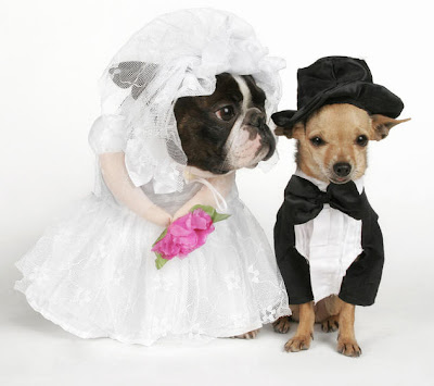 wedding costume dogs puppies