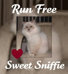 In Memory of Sweet Sniffie