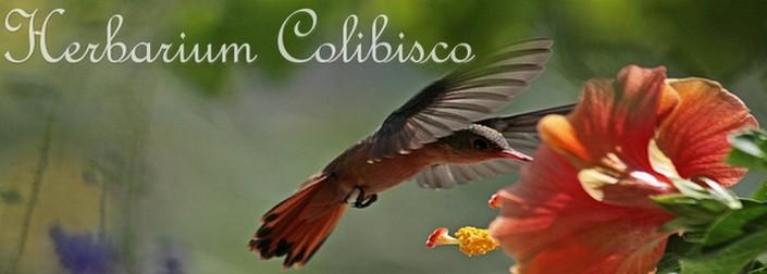 Herbarium Colibisco