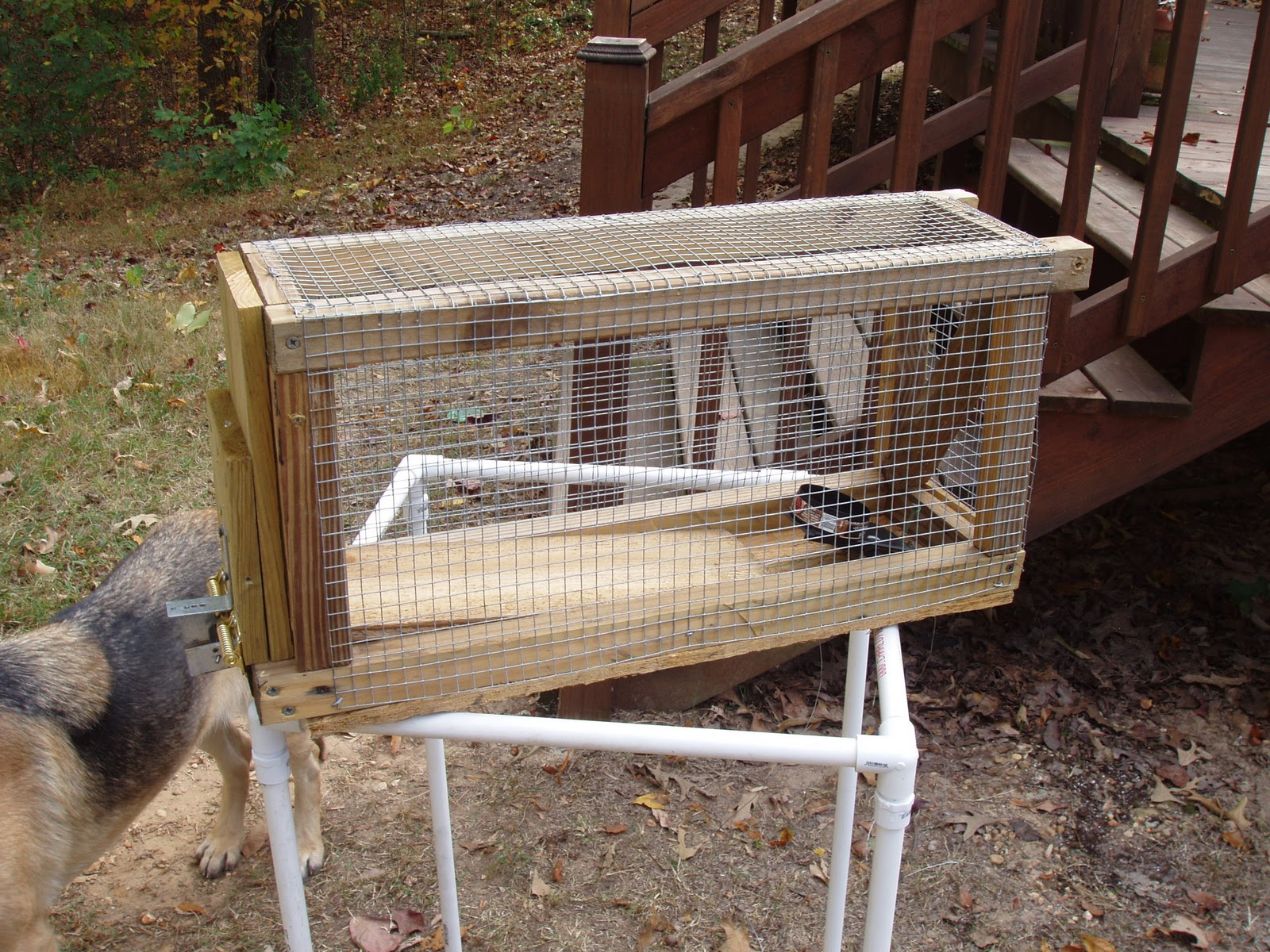 Squirrel Traps Homemade http://www.infinitopromo.com.br/newsletter/homemade-squirrel-trap