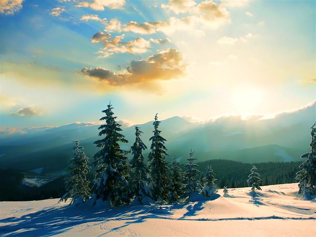 evergreens winter wallpaper