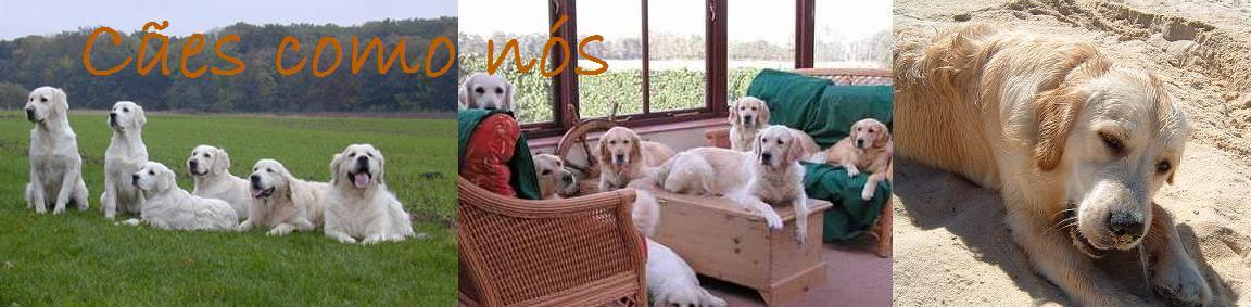 Cães como nós