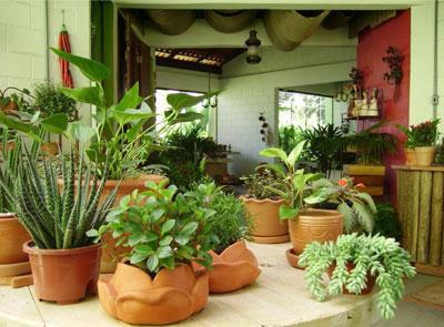 Vict ria herbal produtos artesanais vamos levar as - Plantas de sombra exterior ...