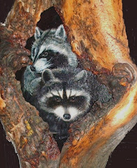 """Home Sweet Home Raccoon Style"""