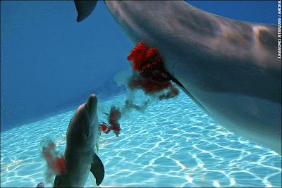 http://2.bp.blogspot.com/_k-uzaP4Gx6M/SMEImEX2LPI/AAAAAAAACNs/5R1ARgG8wTU/s400/dolphin3.jpg
