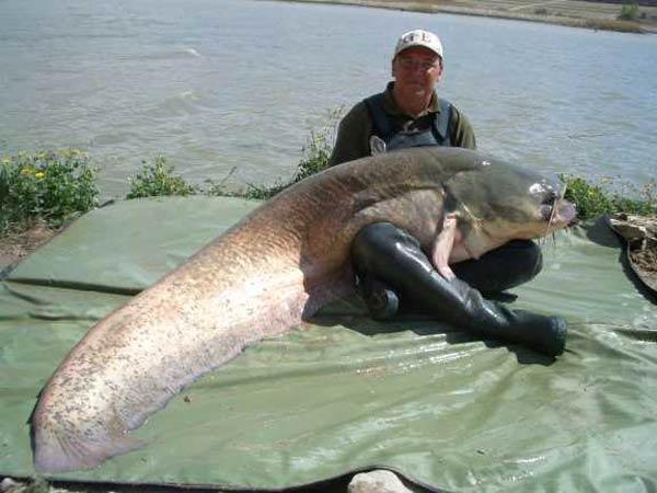 Big Fish Ever Caught