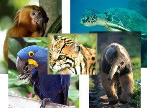Animais em extinção na Amazônia