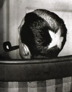 Cortes de cabelos radicais