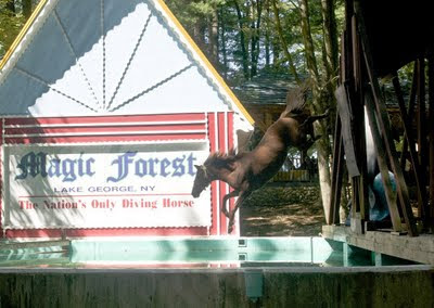 Sign for The Magic Forest. In front of it a real, live brown horse jumping from a platform into a pool of water