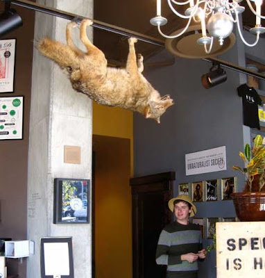 Taxidermied coyote hanging upside down from the ceiling