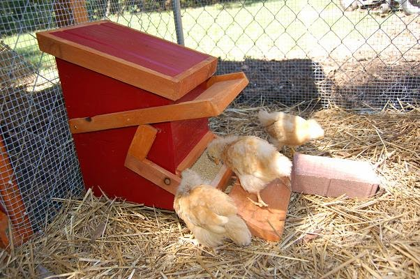 a to make rat technorati how chicken allotment proof tags feeder rodent heaven