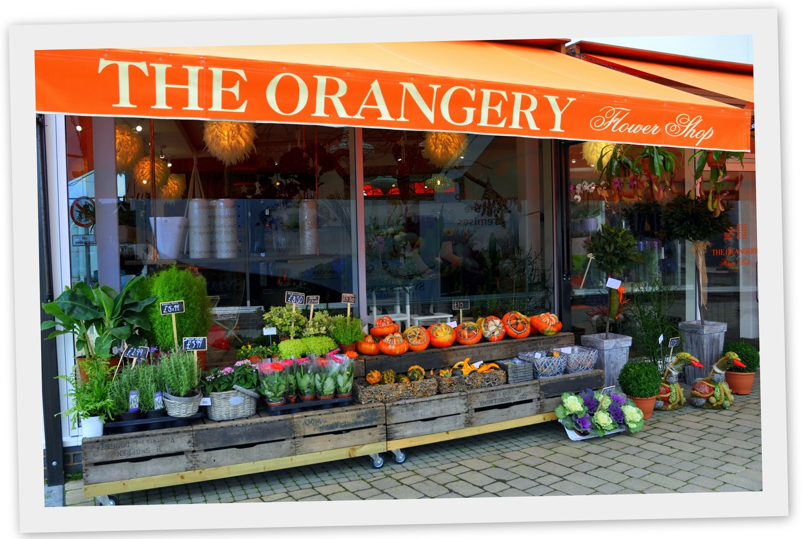 Mike downes we make videos to help people learn the orangery the orangery flower shop 19 talisman square cv8 1jb 01926 859712 theorangeryflowershopgmail mon to fri 9 6pm sat 9 5pm sun closed izmirmasajfo