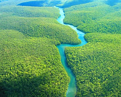 PRESERVAR A AMAZONIA