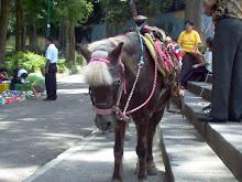 Carreras de Ponys