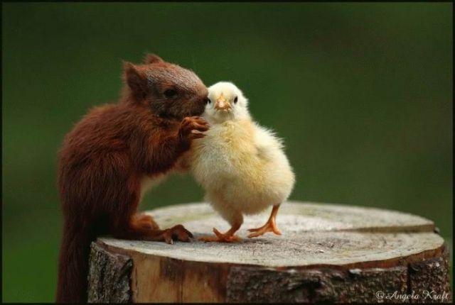 Image result for animal friendship