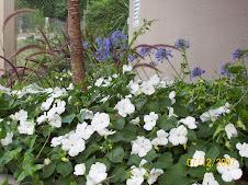 Alegrias Blancas