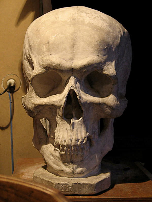 Human skull profile open jaw