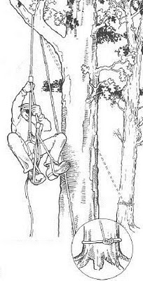Подъём по верёвке на дерево