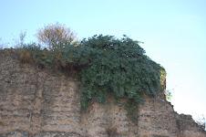 Alc.Iner. Coliceo Romano -Italia
