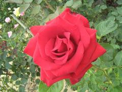 Bunga Bunga Cameron