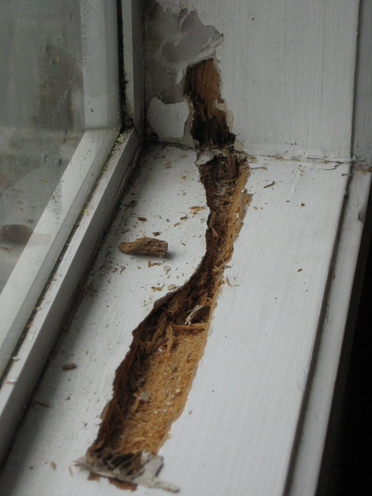 Andrew\'s Life: Rotting Window Frames in Housing New Zealand House