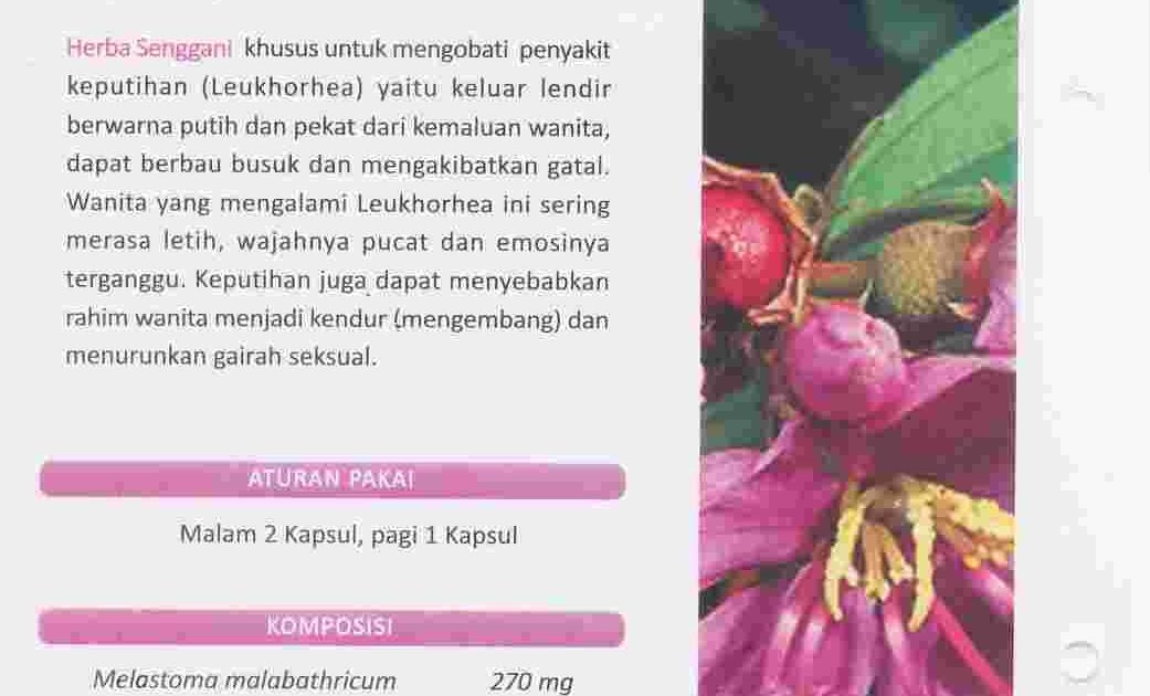 Herba Penawar Alwahida: HERBA SENGGANI: obat Herbal Alami ...