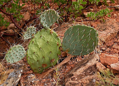 Green cactus; Red rock