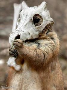 cubone- mascota oficial