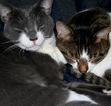 Greyboy & Charlie