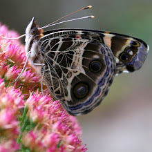 See Butterflies & More.....