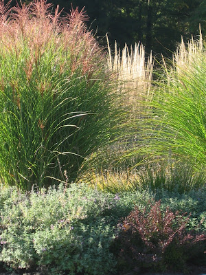 jb+front+grasses Land Speak