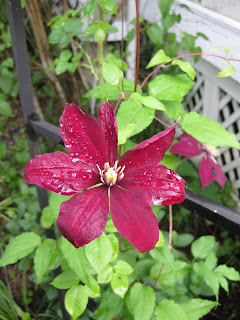 Bloom Day  June 09