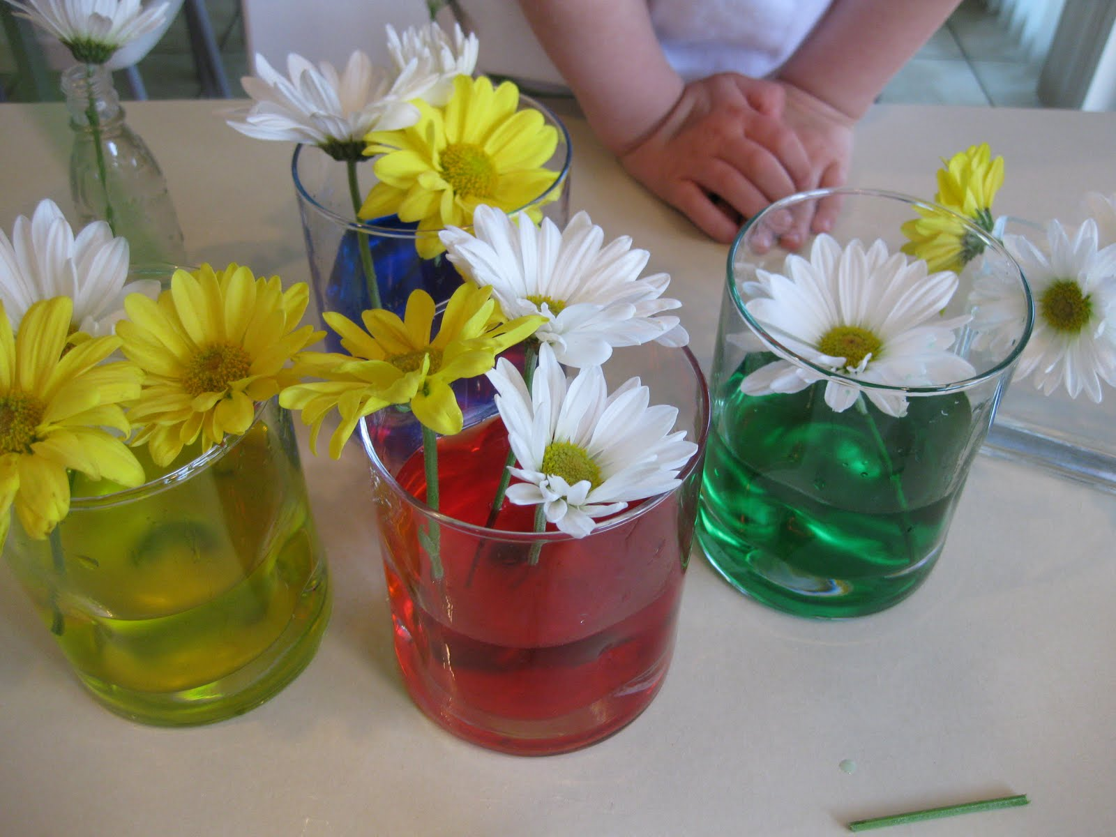 Flowers and colors coloring flowers teach mama for How to dye flowers using food coloring