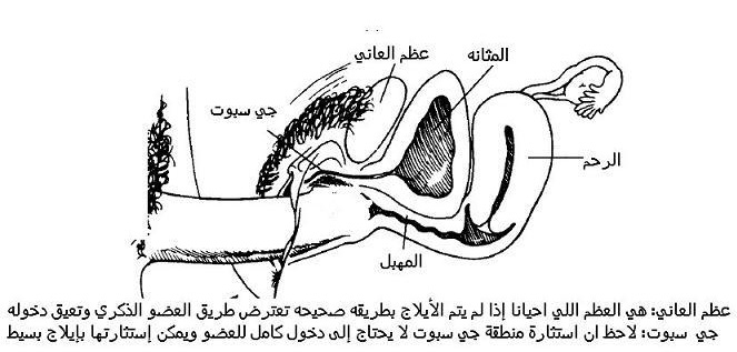 اوضاع الايلاج بالصور http://wawsecrets.blogspot.com/2010/11/blog-post_5995.html