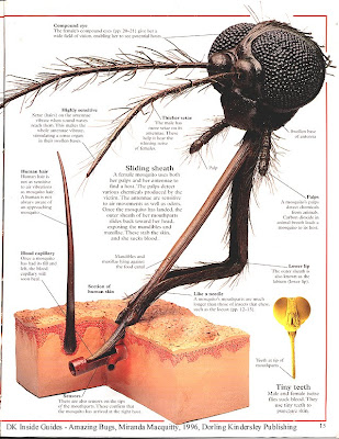 Mosquito Vectors Of Infectious Diseases
