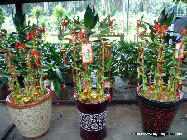 my nice garden buying auspicious indoor plants for. Black Bedroom Furniture Sets. Home Design Ideas