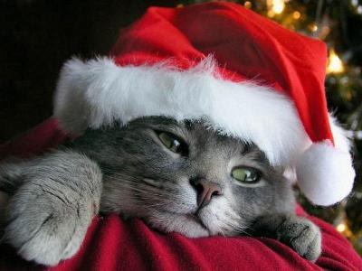 Bonne année 2011 ! Gatto+Natale