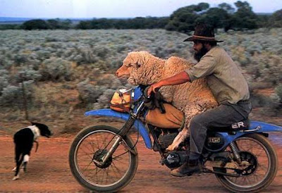 [Image: easy_rider_sheep.jpg]