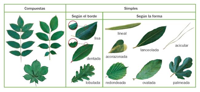 Blog educativo las plantas for Imagenes de las partes del arbol