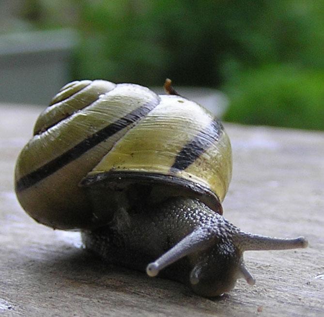 Frankie pain la maison de l 39 escargot et de la tortue correction - La maison des escargots ...