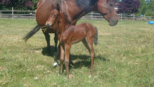 Ria and her filly, Mahri