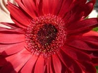 Con todos los pétalos hacemos una flor.