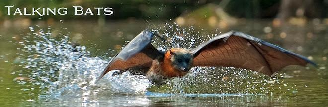 Talking Bats
