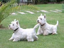 ....ed ecco Nelson ed Emy i miei fantastici cagnolini.....